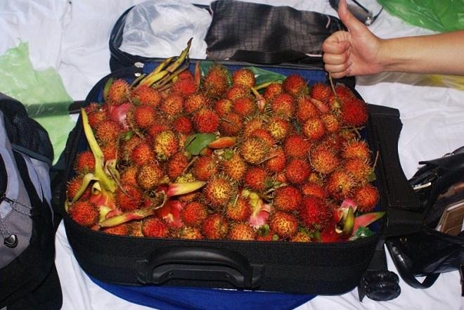 Провоз фруктов в ручной клади